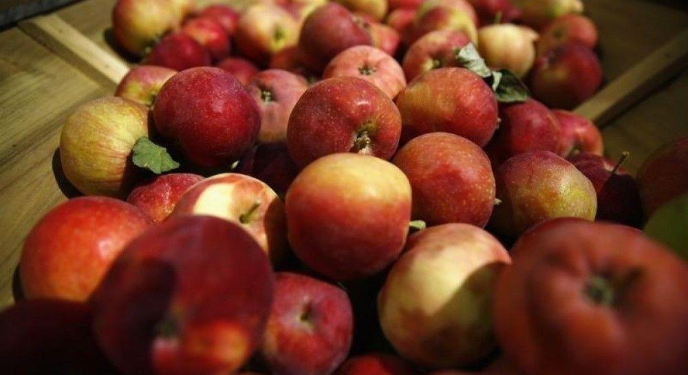 Экспорт вырос втрое: какие страны покупают украинские яблоки