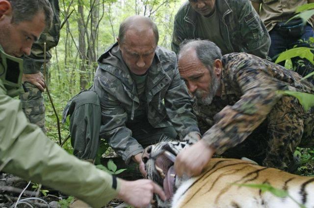 Французский телеканал извинился за ошибку в сюжете про Путина и тигров