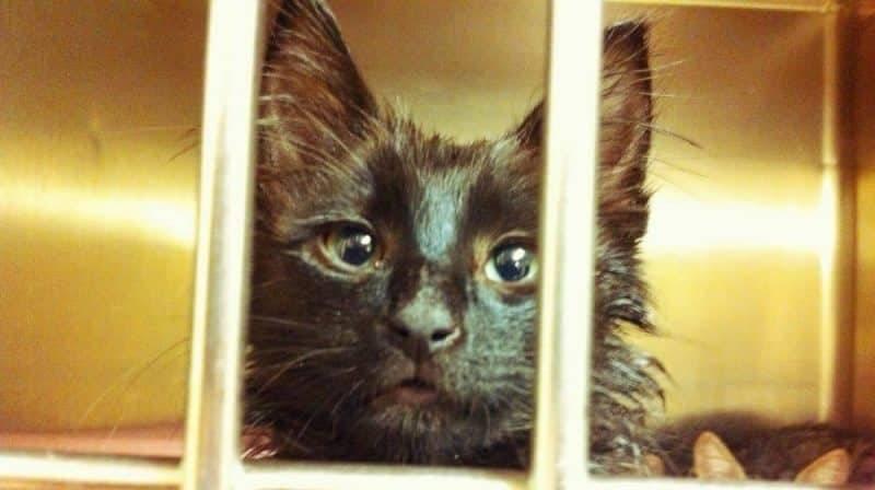 В приюте для животных, вместо эвтаназии, котят замораживали на смерть