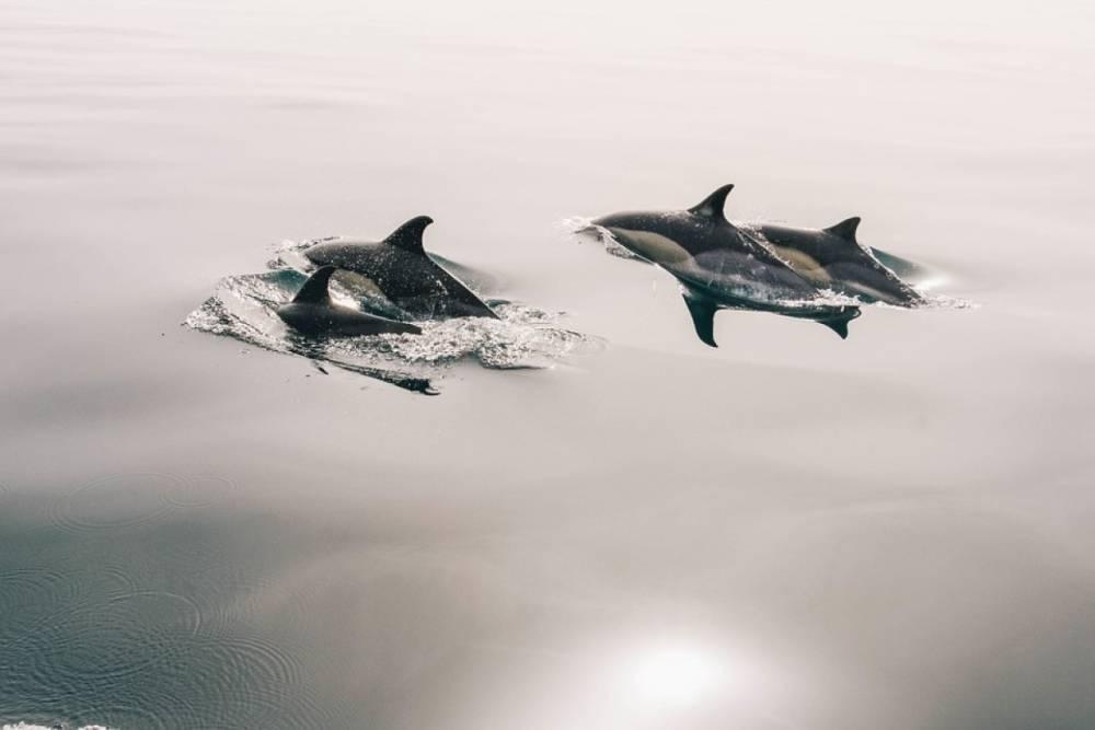 Мертвых дельфинов выбросило на побережье Азовского моря в Крыму