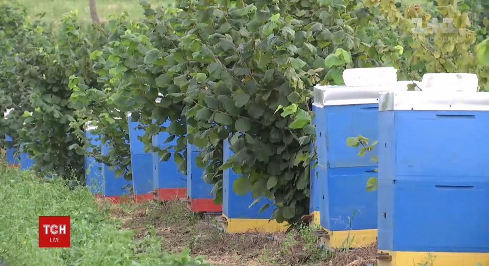 Сегодня - День пасечника: Украина удерживает третье место среди экспортеров меда в мире несмотря на массовую гибель пчел