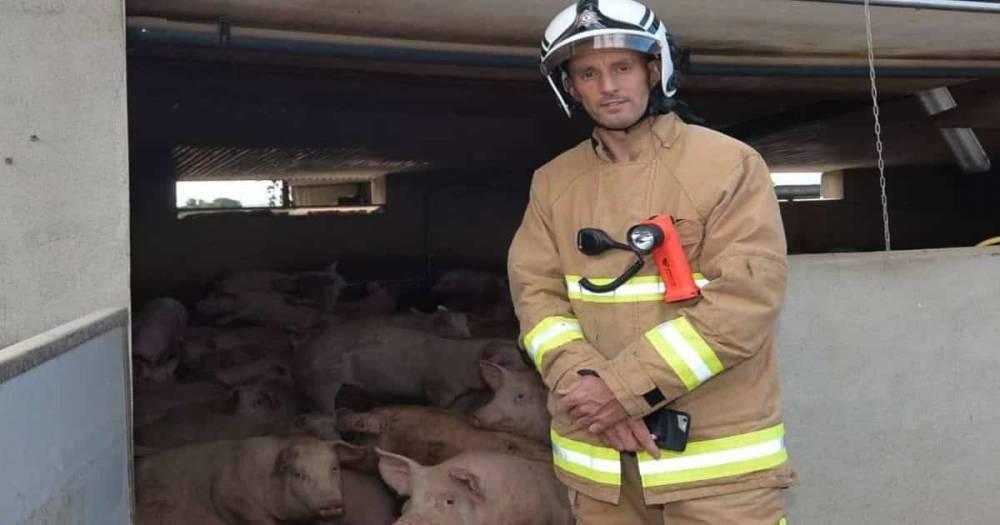 В Северной Ирландии спасли больше 70 свиней, упавших в резервуар для навозной жижи