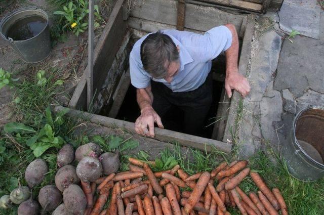 Как подготовить погреб к приёму нового урожая?