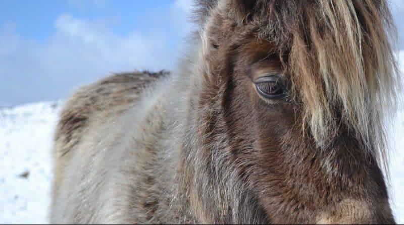 Полиция Делавэра считает, что несколько человек могли изнасиловать пони