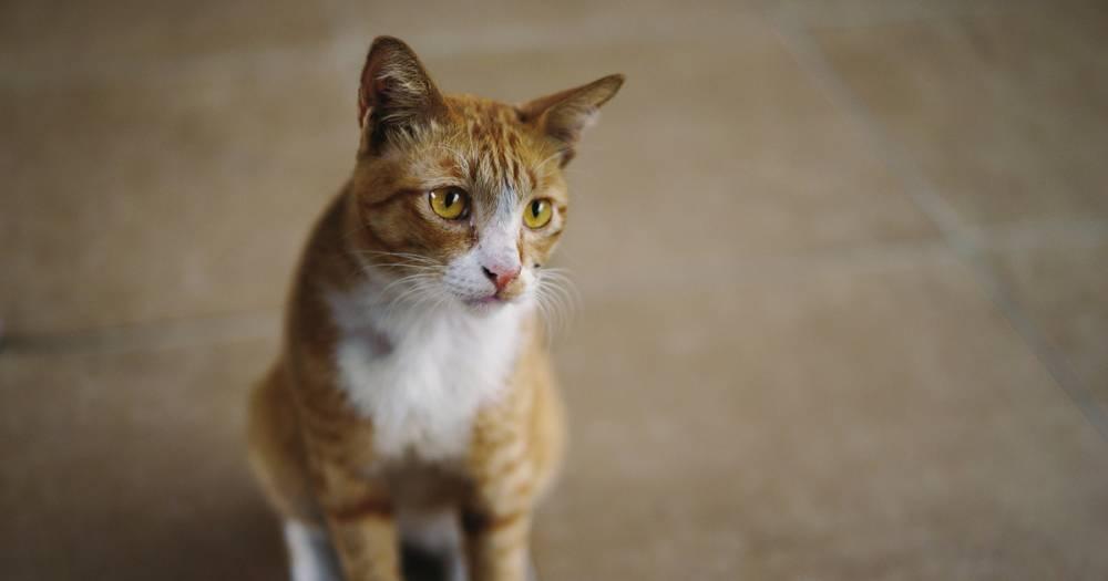 """""""Мяукает из последних сил"""". В Кемерове спасают кота, запертого без еды и воды"""