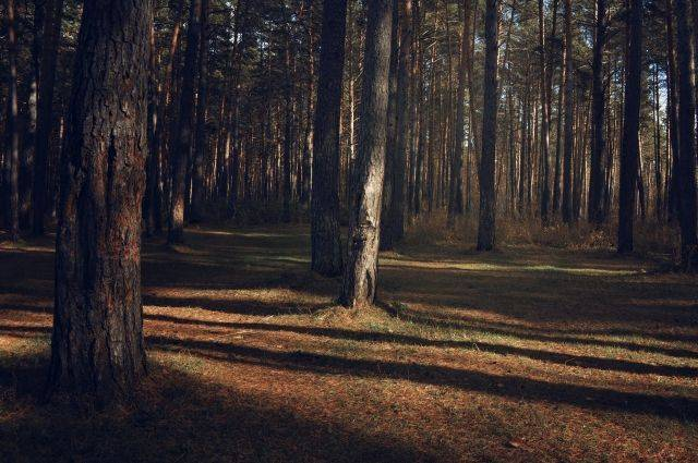 Путин и Медведев поздравили работников леса с профессиональным праздником