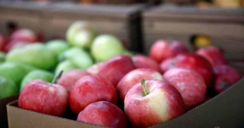 Безопасно ли покупать фрукты? Женщина обнаружила иголку в яблоке, купив его для дочери