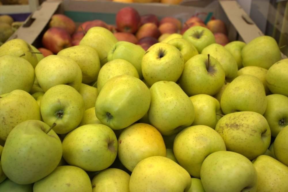 Сирия: фермеры рассчитывают на рекордный урожай яблок