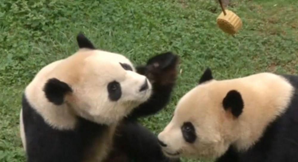 Праздник середины осени: в Китае жителей зоопарка угостили фруктами и традиционными пряниками