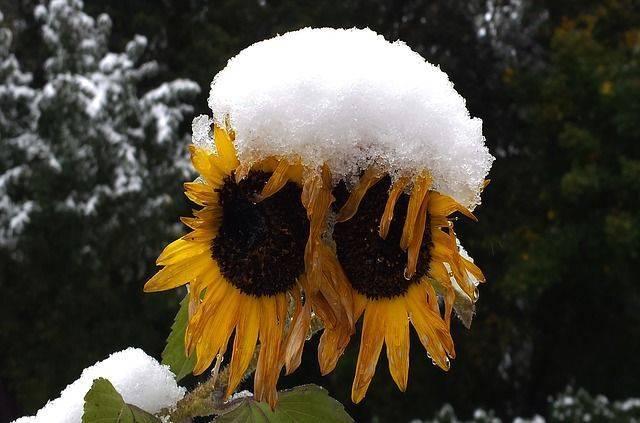 В Москве 26 сентября может выпасть первый снег