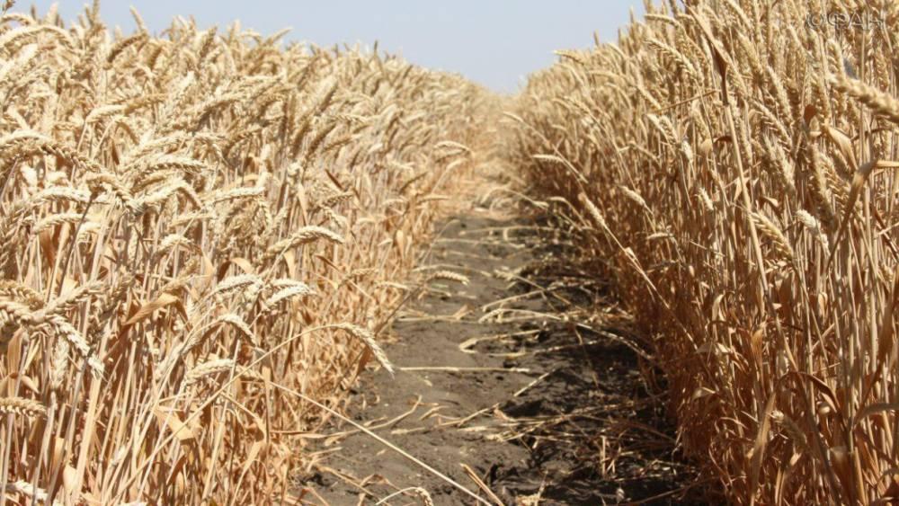 В США экспорт пшеницы из России назвали угрозой благосостоянию американских фермеров
