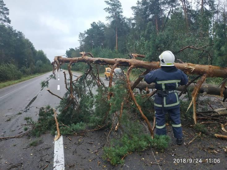 Ураган на западной Украине повалил деревья