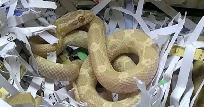 Покупатель был шокирован, когда купил в Argos чайник, а внутри обнаружил еще и бонус…живую змею: фото и иллюстрации