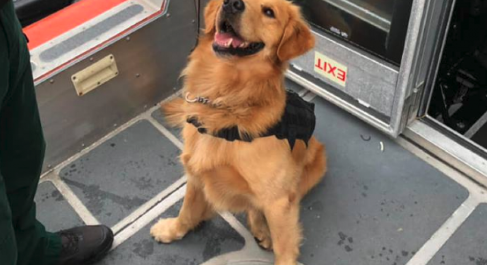 Пес получил передозировку наркотика во время проверки пассажиров рейв-круиза