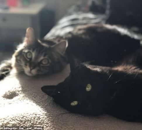 Мужчина не знал, куда деть кошек дочери — так что арендовал для них целую квартиру