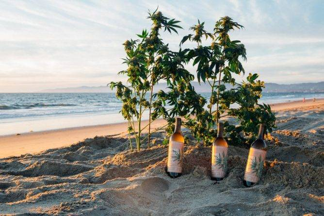 Эксперты: следующие 4 года ознаменуют революцию на рынке напитков, содержащих марихуану
