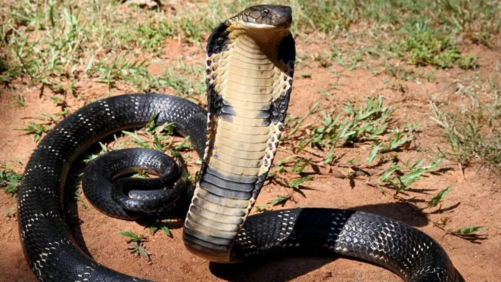 Ученые объяснили, как змеи лишились конечностей: фото и иллюстрации