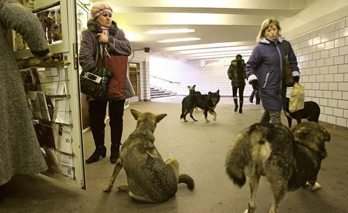 Шведы в ужасе: ученые усыпляют собак ради исследований (Postimees, Эстония)