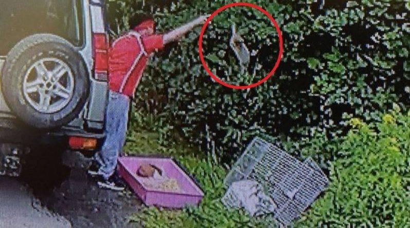 Мужчину заключили в тюрьму после того, как он избавился от двух кроликов