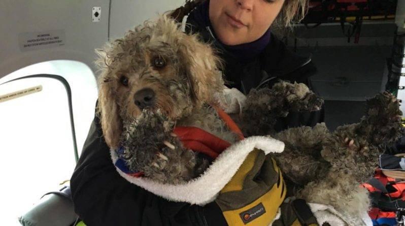 Во время учений экипаж вертолета береговой охраны Инвернесса спас собаку, потерявшуюся в Кайрнгорме перед штормом Гарет (видео)