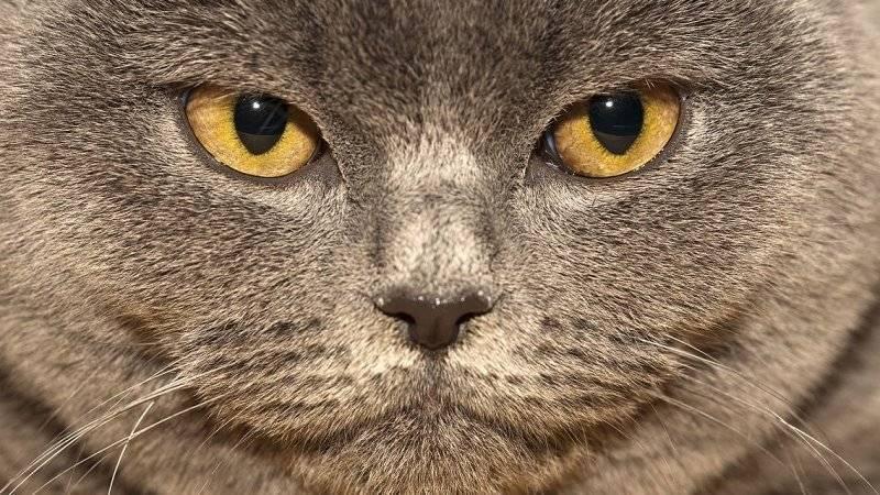 Выкинувшего кота с четвертого этажа приговорили к году в колонии строгого режима