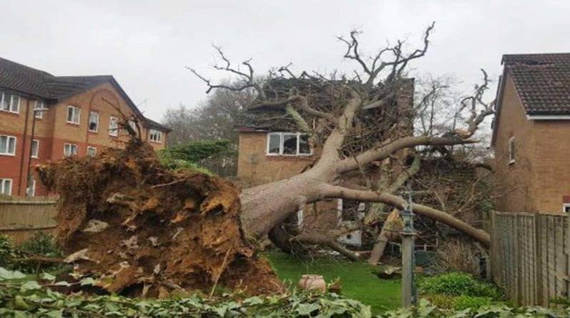 Мужчина получил травму головы, когда на его дом упал дуб и проломил крышу