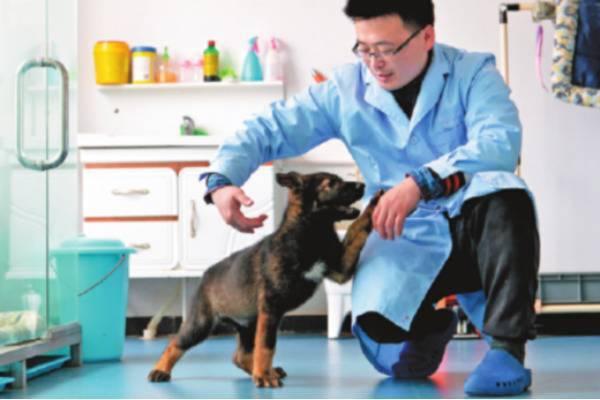 В Китае стартовала программа клонирования лучших полицейских собак