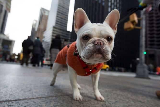 В Манхэттенском ресторане Wilson анонсировали меню для собак, где цена стейка доходит до $42