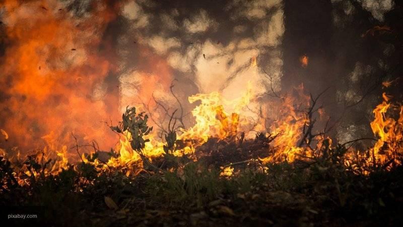 30 лесных пожаров зафиксированы в России