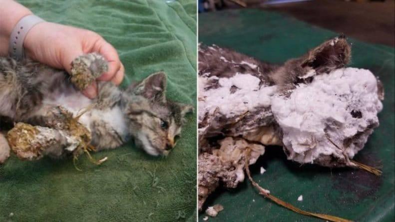 В мусорном баке нашли живого котенка, которого «замуровали» в аэрозольную пену и выкинули