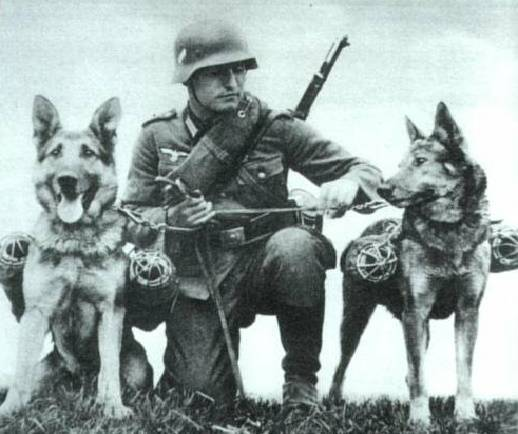 «Монстр Третьего Рейха»: почему так называли овчарку Дауфмана   Русская семерка