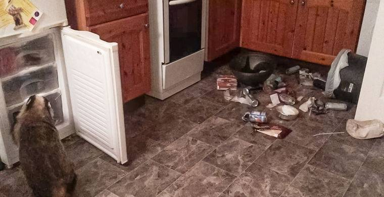 Барсук залез в дом и ограбил холодильник / Моя Планета: фото и иллюстрации