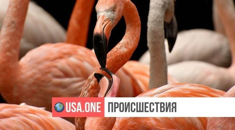 В зоопарке США фламинго пришлось усыпить после того, как школьник бросил в него камень