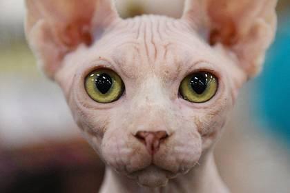 Переданного семье Алибасова кота-самозванца потребовали вернуть: фото и иллюстрации