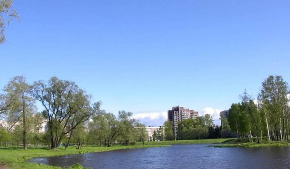 На месте вырубленных деревьев в Муринском парке появится новая прогулочная зона: фото и иллюстрации