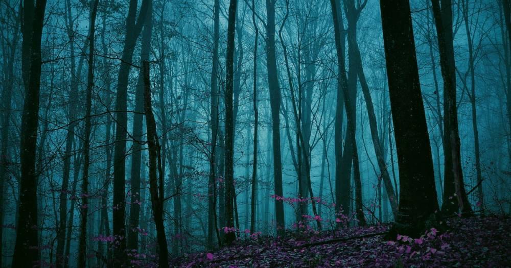 В Смоленской области в лесу заблудился мужчина: фото и иллюстрации