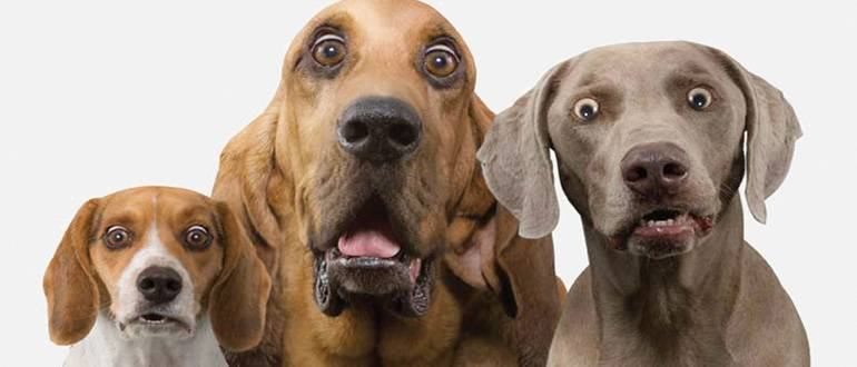 Собаки навлекут на вас проклятие: фото и иллюстрации