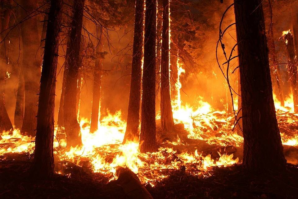 За прошедшие сутки в Бурятии тушили 24 лесных пожара: фото и иллюстрации