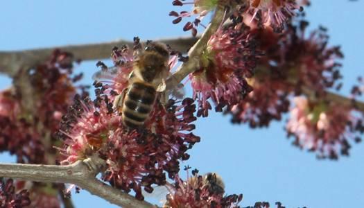 В Україні вдосконалять вимоги до меду: фото и иллюстрации