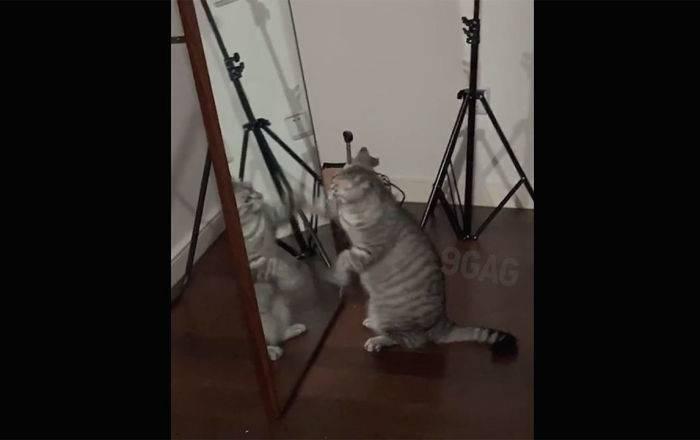 """Хук справа, хук слева: упитанный котяра дубасит своего """"противника"""" – смешное видео: фото и иллюстрации"""