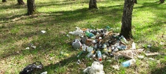 В тюменском лесу мужчина погиб во время сбора мусора: фото и иллюстрации
