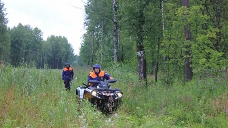 Пропавшую в Нижегородской области девочку ищут пять отрядов волонтеров: фото и иллюстрации