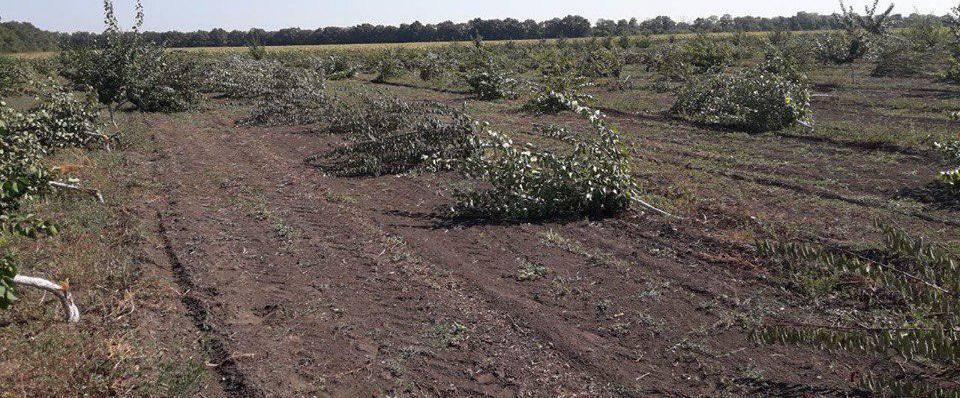 Винницкому фермеру конкуренты вырубили 5 гектаров фруктового сада