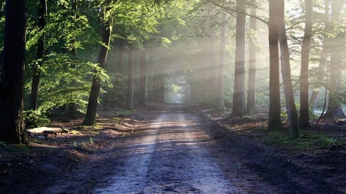 В лесу Петербурга откопали чемодан с окровавленной женщиной: фото и иллюстрации