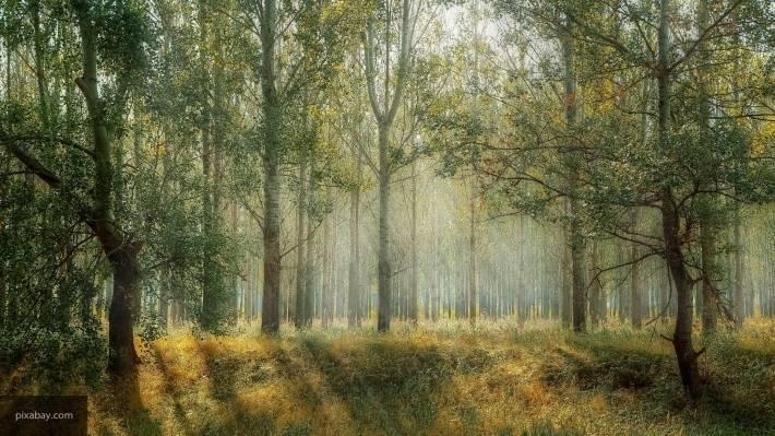В Республике Татарстан стартует акция «Чистые леса Татарстана»: фото и иллюстрации
