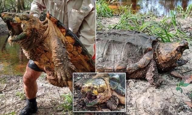 черепаха на тракторе фото предпочтения, средства