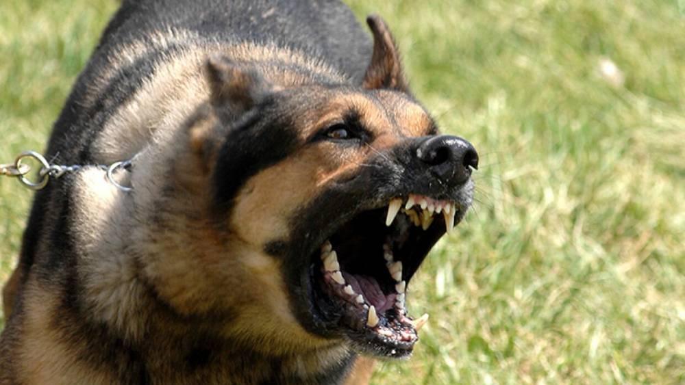 Стая диких собак держит в страхе жителей города в Пензенской области
