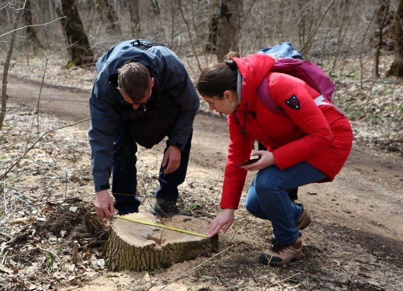 Власти Ставрополья вырубили деревья на 78 млн рублей - полиция не увидела в этом преступления