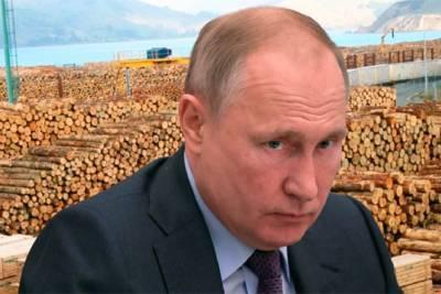 Путин пообещал поставить строгий заслон разворовыванию российских лесных богатств, но с 1 января 2022 года