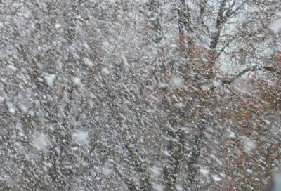 МЧС Ленобласти предупреждает местных жителей о непогоде 20 октября